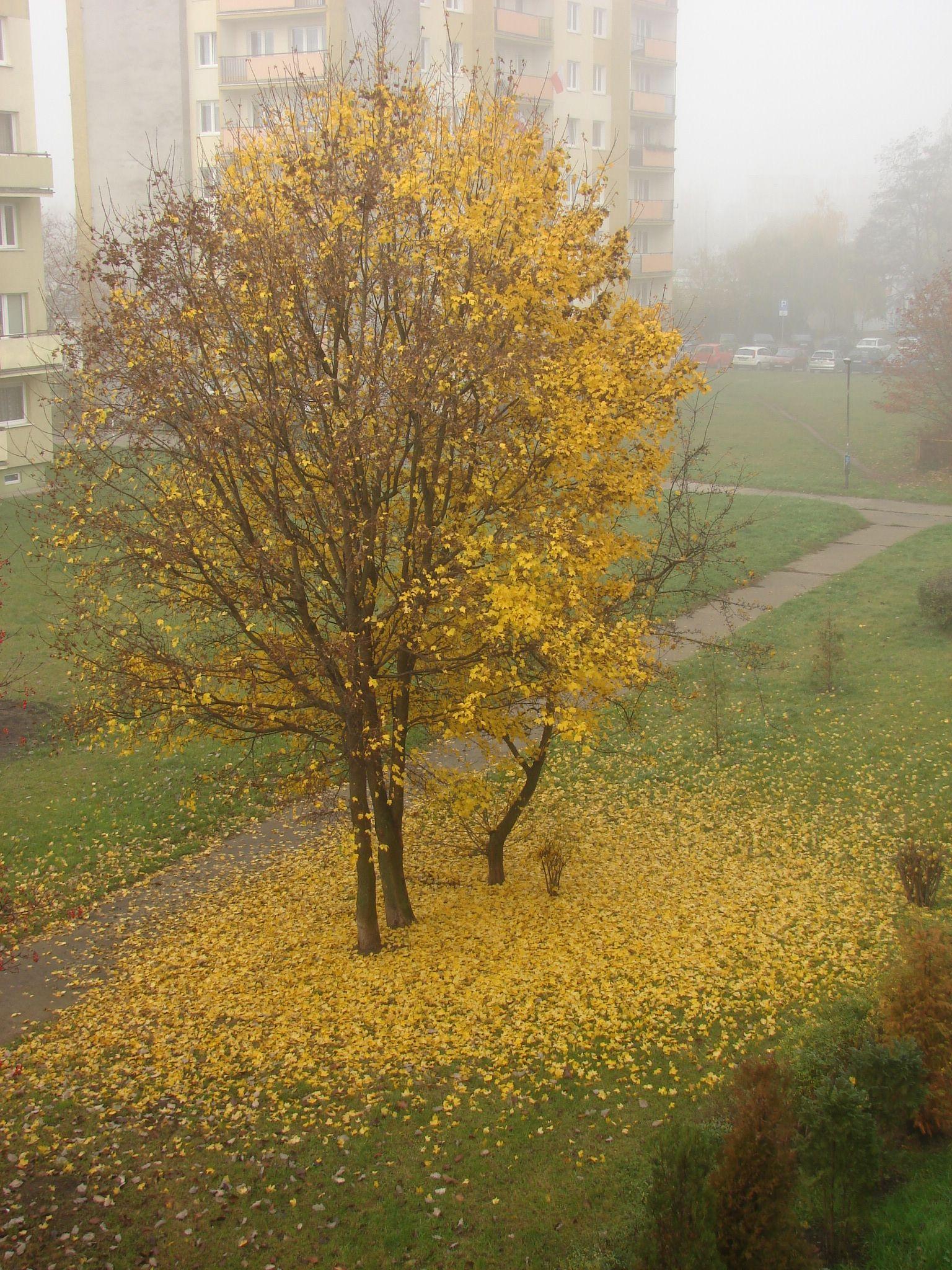 Złoto jesieni 2014